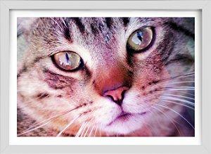 Quadro Gato