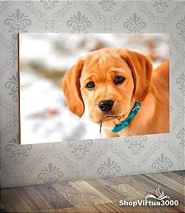 Placa em MDF Horizontal 6mm Ultra Brilho Personalizado Cão Retriever Dourado - 01 Unidade