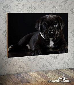 Placa em MDF Horizontal 6mm Ultra Brilho Personalizado Cão Cane Corso Preto - 01 Unidade