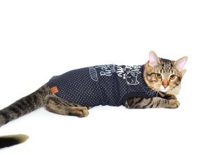 Regata para Gatos Best Friend Preto