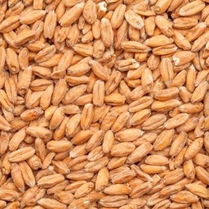 Malte Wheat Blanc - 3 a 6 EBC