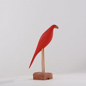 Arara Vermelha 4