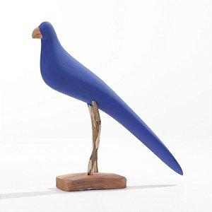 Arara Azul 01