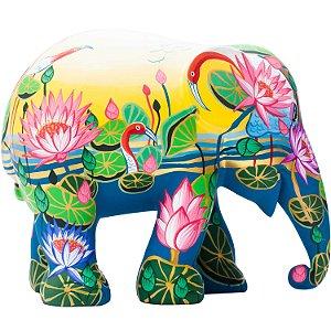 Amazing Lotus - 15 cm