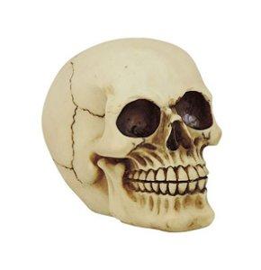 Crânio Caveira Resina Osso Pequena