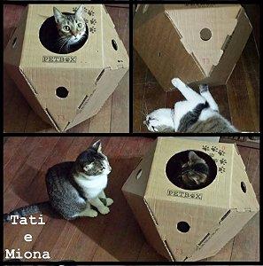 Caixa Interativa para Gato
