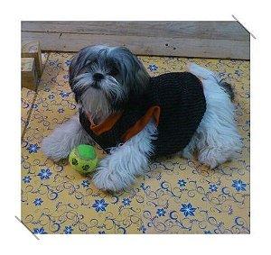 Colete para cachorro em tricot na cor preta com brilho