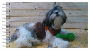 Colete de tricot para cachorros pequenos com brilho