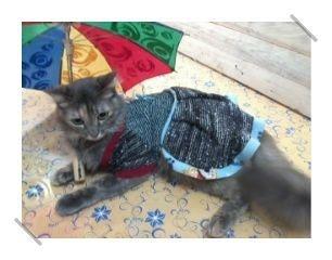 vestido de tricot para cães ou gatos pequenos