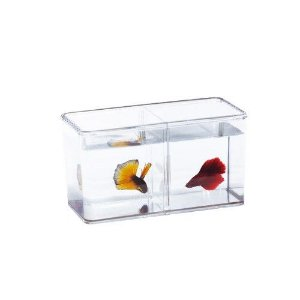 Beteira dupla com divisória removível - Betta Fish Double Display Case - Ista
