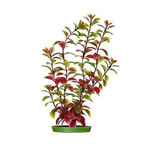 Planta para decoração de aquários Red Ludwigia Com 3 Unidades PP-2082