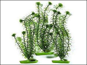 Planta para decoração de aquários Anacharis Com 3 Unidades PP-2081