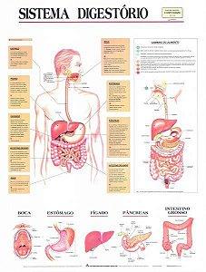 Mapa Sistema Digestório, 1,20x90cm, em Papel Off Set, laminado com tubo nas bordas e tubo para armazenamento, mod.: 132-01_TAR (Bia Mapas)