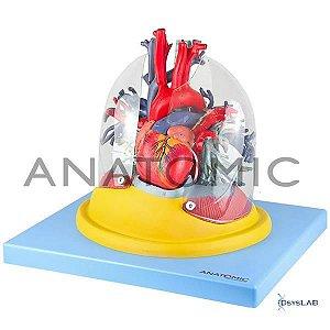 Pulmão Transparente com Arvore Brônquica, Traqueia, Coração e Mediastino, mod.: TZJ-0319-B (Anatomic)