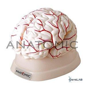 Cérebro com Artérias em 8 Partes, mod.: TGD-0303 (Anatomic)
