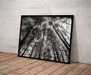 Quadro Floresta Natural Inverno