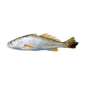Peixe Corvina Inteira Congelada 1Kg