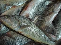 Peixe Corvina Inteira Congelada