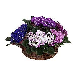 Cesta Luxo de Violetas