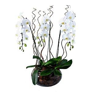 Sofisticadas Orquídeas Brancas