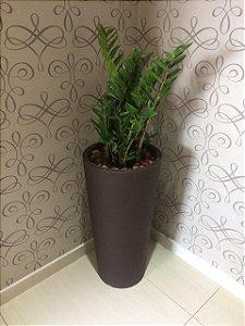 Zamioculca Plantada Presente