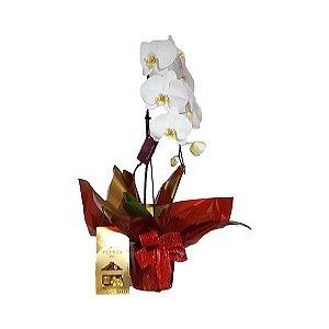 Phalaenópsis Branca com Chocolate Alpino