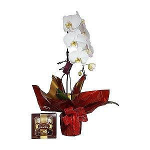 Phalaenópsis Branca com Ferrero Collection