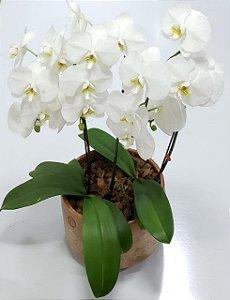 Orquídea no Vaso de Cerâmica Luxo