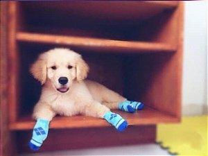 Meia Antiderrapante para Cães