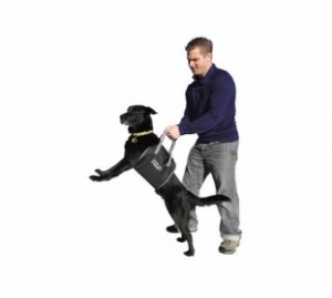 Faixa com alça para Suspender Cães de Porte Médio a Grande