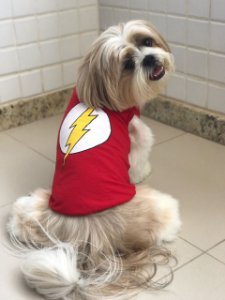 Fantasia Flash Dog - Regata
