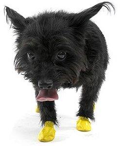 Pawz Amarela - Botas para Cães - Tamanho XX Small (XX Pequena)
