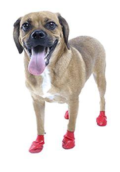 Pawz Vermelha - Botas para Cães - Tamanho Small (Pequeno)
