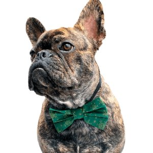 Lacinho ou Gravata Borboleta de Natal - Verde e Dourado