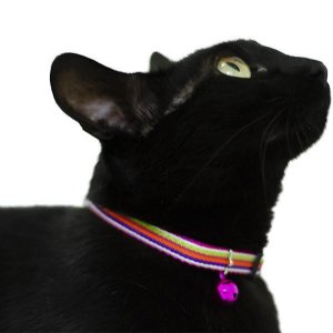 Coleira de Listras Rosa para Gatos