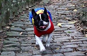 Fantasia Dog Maravilha - Vestido