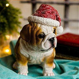 Cachorrinho Bulldog com Gorro de Natal