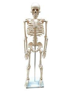 Esqueleto de 85 cm Anatomic