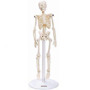 Esqueleto de 20 cm Anatomic