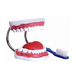 modelo anatômico Arcada Dentária com Língua e Escova