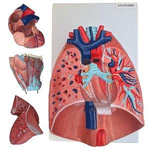 Sistema Respiratório e Cardiovascular, em 7 Partes