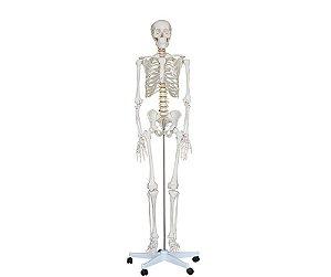 Esqueleto Humano Adulto completo - 1,70M - PVC - Base com Rodízios