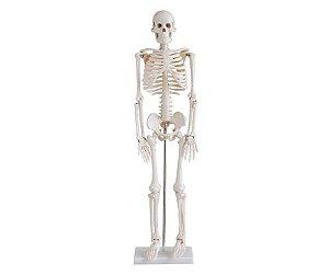Esqueleto Humano - 85cm - PVC - Montado sobre Base