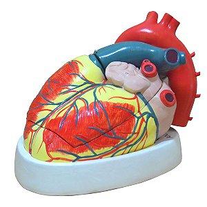Coração Ampliado c/ 3 partes