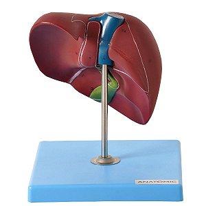 Fígado Básico