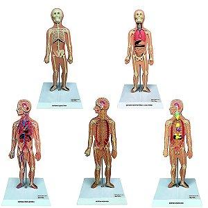 Conj.Pranchas p/a Iniciação ao Estudo Anat. Principais Sist.do Corpo Humano