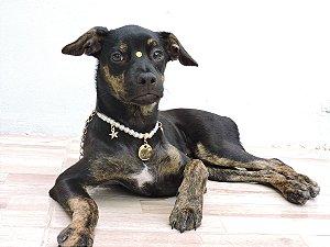 Colar Pet STAR para Cães e Gatos