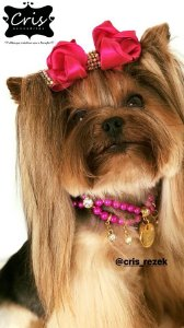 Colar Pet PINK para Cães e Gatos