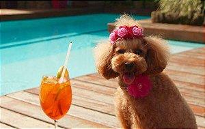 Tiara Pet DELICADEZA para Cães e Gatos