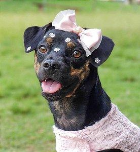 Laço Pet ENCANTO para Cães e Gatos